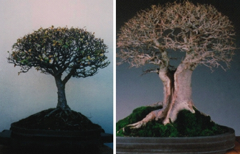 Creativity and Bonsai (5/6)