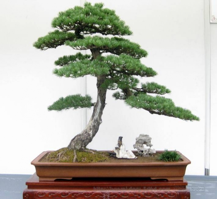 Movement and Flow in Bonsai (4/6)