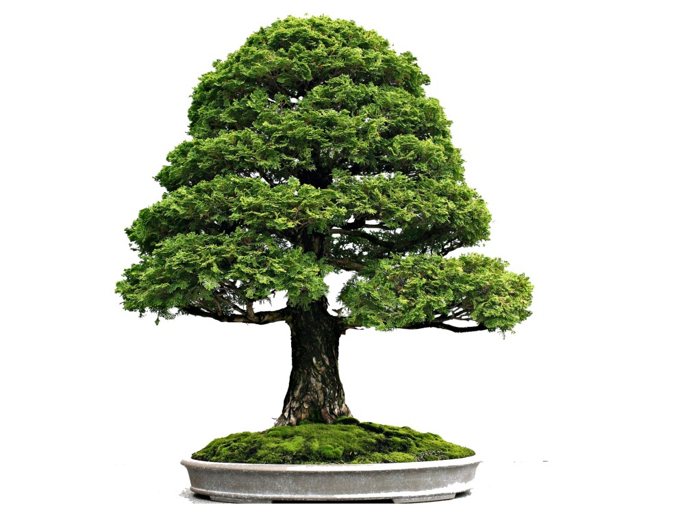 Movement and Flow in Bonsai (1/6)