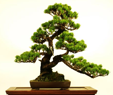Movement and Flow in Bonsai (2/6)