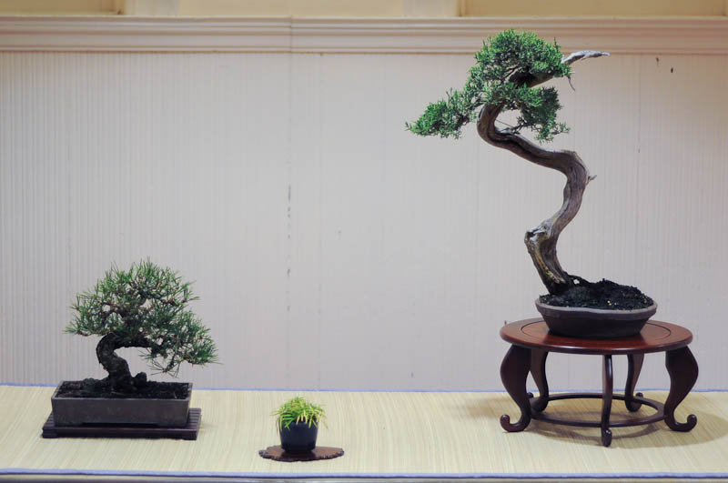 Movement and Flow in Bonsai (6/6)