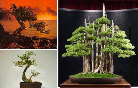 Creativity and Bonsai (4/6)