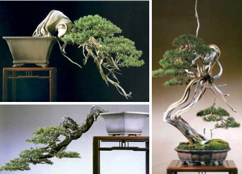 Creativity and Bonsai (3/6)