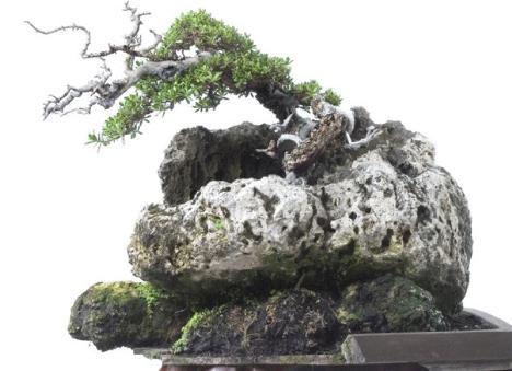 Creativity and Bonsai (1/6)