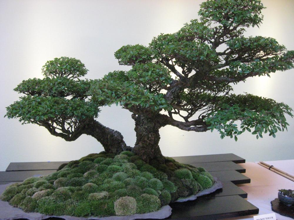 Movement and Flow in Bonsai (3/6)