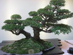 sample bonsai