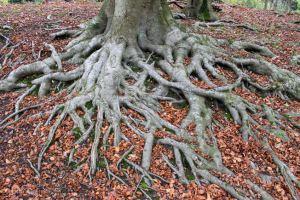 Autumn bonsai images 2014 (17)