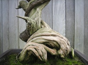 bonsai_huntington_library_1