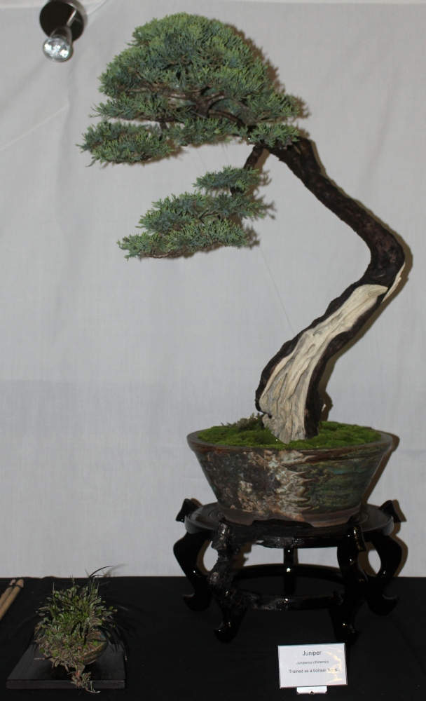 New Zealand National Bonsai Convention and Show (1) (1/6)
