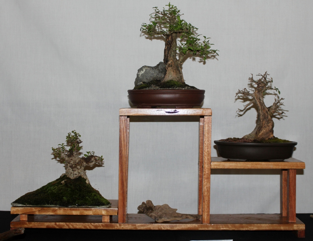 New Zealand National Bonsai Convention and Show (1) (2/6)