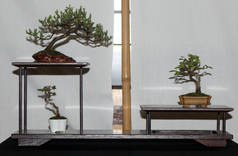 New Zealand National Bonsai Convention and Show (1) (3/6)