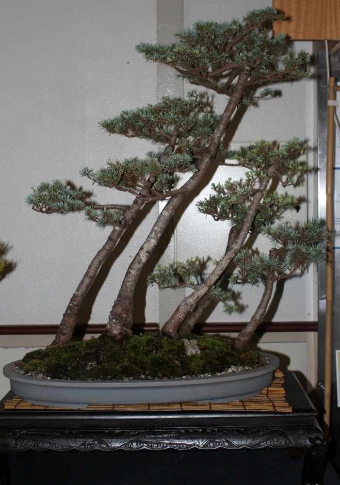 New Zealand National Bonsai Convention and Show (1) (6/6)