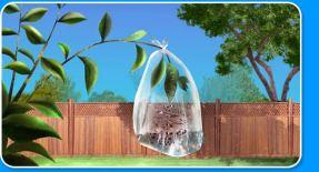 transpiration_experiment