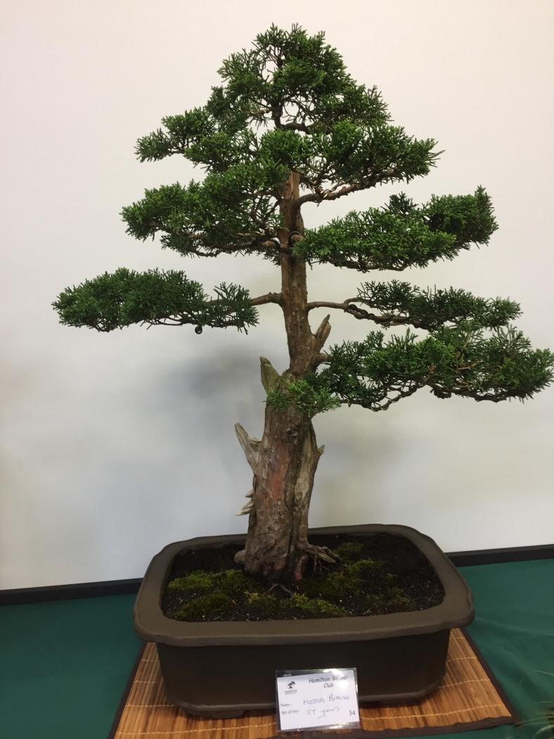 Bonsaiplace Creativity Through Bonsai Tree Wiring Video Standard Of Trees Rising Every Year And With The Great Work Being Done Around Country Future Is For New Zealand