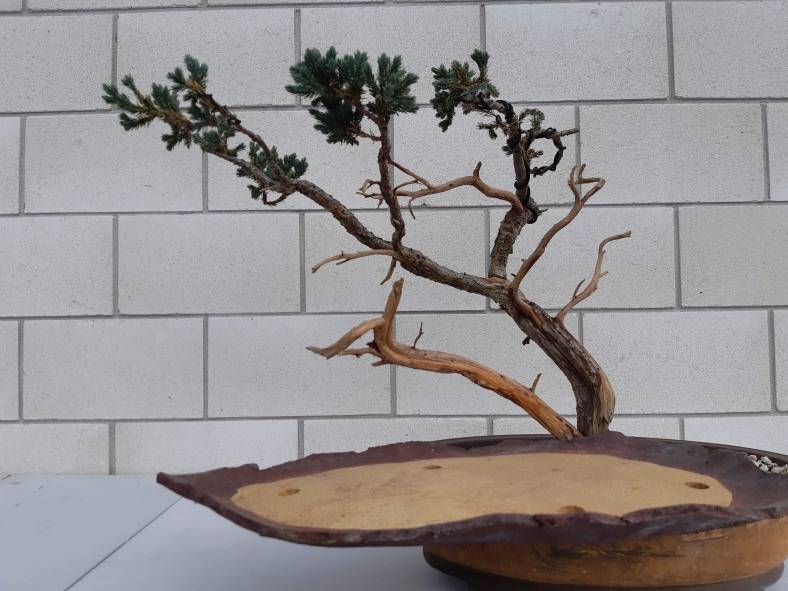 Amazing Bonsai Design Bonsaiplace Wiring Digital Resources Funapmognl
