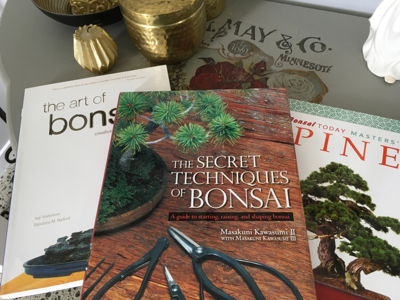 Bonsai Show Bonsaiplace